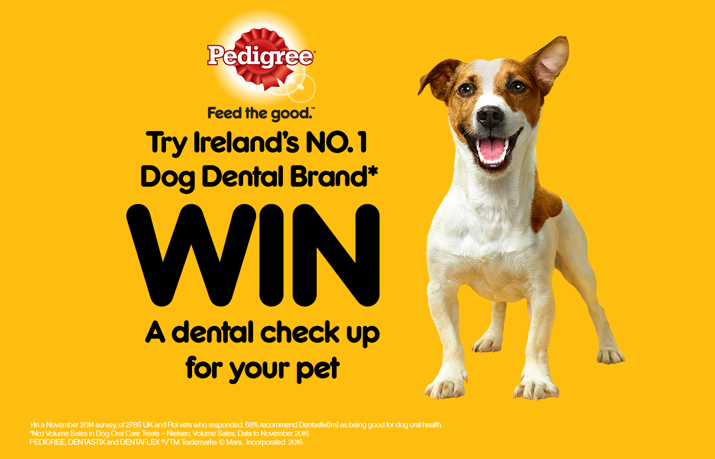 Be in with The Chance to Win a Dental Check Up for your Pet with Pedigree