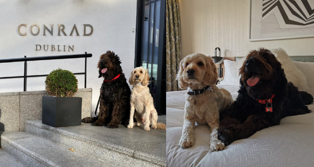 Win a Pooch Pamper Package at the Conrad Dublin